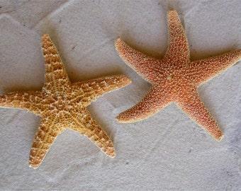 2 IRREGULAR Orange Starfish 6.5 inch Sugar Starfish Sea Star
