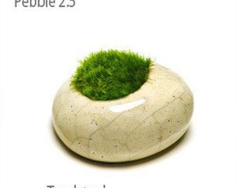 Moss Rocks - Pebble Toadstool 2.5 inch