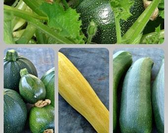 Zucchini Squash Collection Heirloom Garden Seed Non-GMO Naturally Grown Open Pollinated Gardening