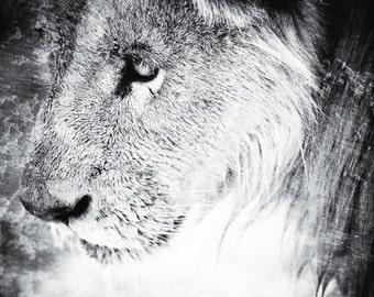 Lion Photography - Wildlife Black and White Wall Art  - Contemporary Animal Photo - Monochrome Home Decor Print