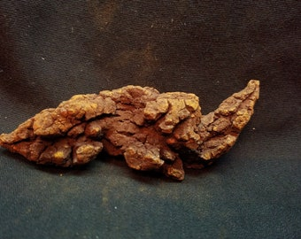 Coprolite, Fossilized Dino poo, dinosaur dung  (KP5)
