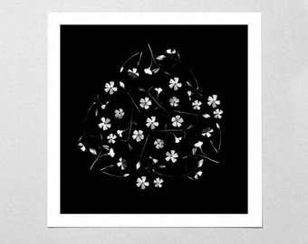 Fine Art Giclée Print - Dancing Flora - Floral - Flowers - Black & White - Photographic Print