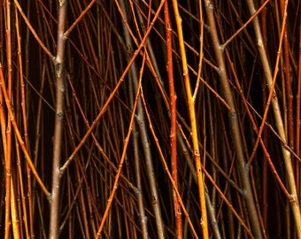 River Willow - 8x10 Signed Fine Art Photograph