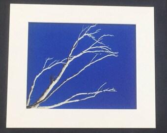 Tree branch against sky