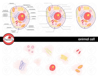 Animal Cell Science Diagram Clipart Set (300 dpi) School Teacher Clip Art Science Physical Science Diagram