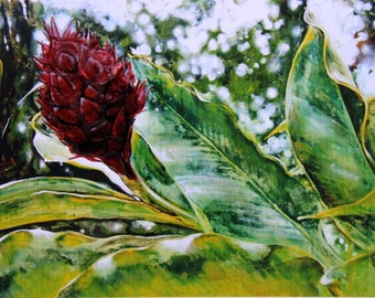 GINGER BEAUTY (Ginger Flower) Limited Edition Print/Extraction (Large)