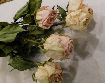 Dried Roses, Roses, dried roses, Ivory and pink dried roses