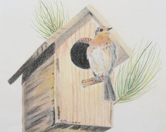 Original colored pencil drawing art bird birdhouse pine