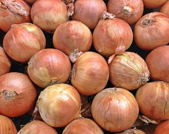 Utah Yellow Sweet Spanish Onion Heirloom Garden Seed Non-GMO 200+ seeds Naturally Grown Open Pollinated Gardening