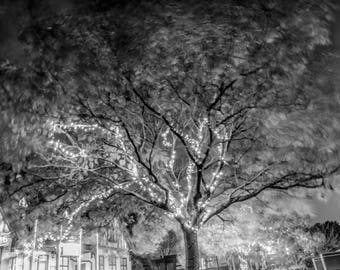 Fairy lights in the tree Photo / Poster / Canvas Black and White