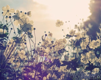 Flower Photography, Dreamy, Landscape, Feminine, Anemones, White, Nursery Decor, Wall Art, Nature, Pastel Home Decor, Floral Print, Large