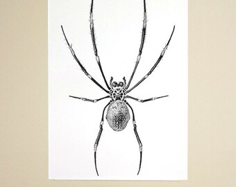 Natural History Illustrations - Poster A3 or A2