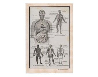c. 1926 HUMAN ANATOMY PRINT - original antique medical print - nervous system - skeleton - muscular system - medical print for doctor