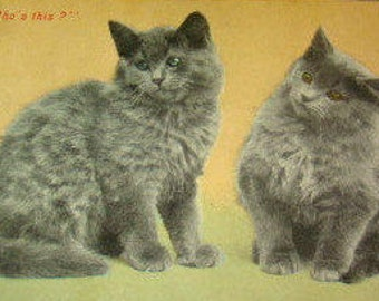 SALE Vintage Grey Cats Postcard