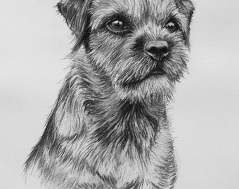 Border Terrier II dog art dog lover gift LE print from an original charcoal drawing available unmounted or mounted ready to frame