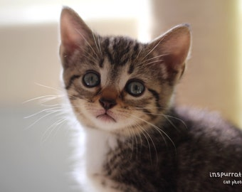 Innocent - Tabby Kitten Photo - Animal Nursery Art - Baby Animal Print - Pet Photography - Cat Photography - Adorable Kitten Photo