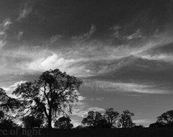 Mt. Diablo, California, landscape photography. Black and white oak tree photograph, hiking, valley view. 16x24 fine art, sunset, drama