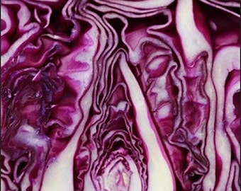 Organic Red Cabbage Heirloom Seed Non Gmo Vegetable Garden Red Acre