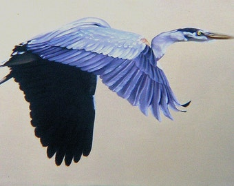 Great Blue Heron 11 x 17 print (image 8 x 16.5)  by artist RUSTY RUST / H-31-P