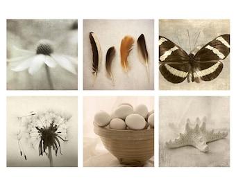 Neutral Decor, Still Life Art Set, Six Prints, Starfish Print, Butterfly Photo, Dandelion Print, Daisy Photo, Feather Art