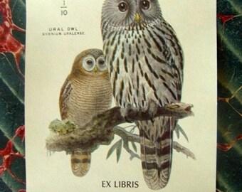 ONSALE Gorgeous Vintage Owls Antioch Gummed Bookplate Labels