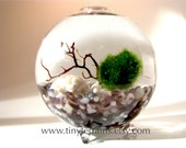 Marimo Terrarium Kit- Personalized Marimo Moss Ball Single Globe Terrarium, 23 Color, Gift Wrap, Gift Message/Card, Fast Shipping