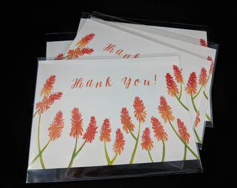 Fire Poker Flower Thank You Postcards - 5 Poscard Set