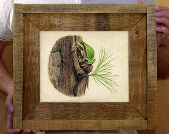 Framed Pine Barrens Treefrog - 8 x 10 inch print by Matt Patterson