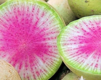 Watermelon Radish Heirloom Seeds - Non-GMO, Open Pollinated, Untreated