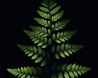 Fern - Fine Art Photograph, Leaves, Nature, Garden Photography, Wall Art