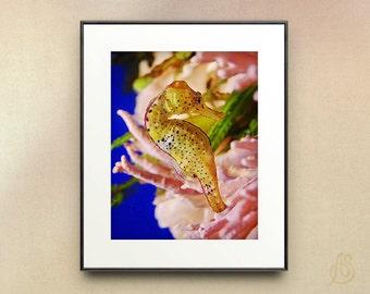 Yellow Seahorse Art photograph //  pink coral // sea life // sea life art print  wall art // 8x10 11x14
