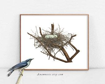 NID avec quatre œufs bleu - Téléchargement instantané imprimable - une illustration de nid oiseau belle années 1800 pour le cadrage, sacs, vêtements, cartes, etc..