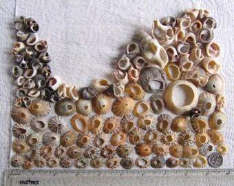 120 Sea Shells Shell Fragments Natural Holes Art Mosaic Craft Supplies (1723)