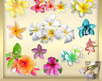 12 Tropical Flowers Clip Art Vol. 1 - Flowers Clipart - Hibiscus clip art - exotic flowers - Hawaiian flowers - Instant Download - png files