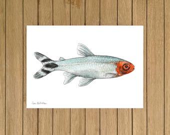 Rummynosed Tetra, Tropical Fish, Giclée Print, Watercolor illustration, A3 A4 or A5 size