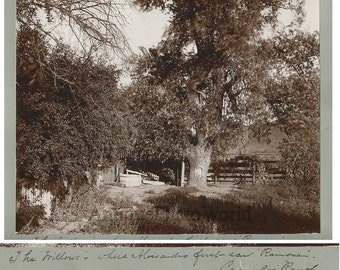 The Willows Rancho Camulos antique albumen photo California
