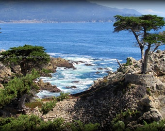 Lone Cypress - Carmel - Monterey - Pacific Ocean - 17 Mile Drive - Photography - Carmel Photograph - Ocean - Ocean photograph - Tree photo