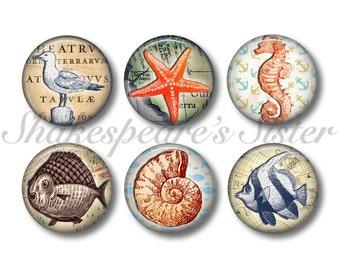 Sea Life Art - Fridge Magnets - Nautical Kitchen - 6 Magnets - 1.5 Inch Magnets - Kitchen Magnets