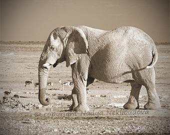 Elephant in sepia photo print - fine art photography, African safari animal, African art print, elephant art, elephant print, Namibia