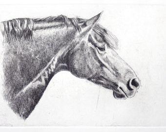 Horse art print - Original Hand-pulled Etching - Horse art - Gift