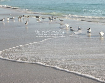 Seagulls in the morning / seaside low tide coastal living Art Photography René Marie Photography Beach Cottage Life gulls sea birds