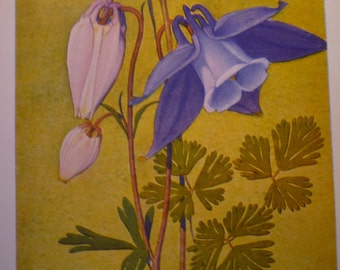 Botanical Print - Ancolie des Alpes - Flower Lithographs - vibrant color prints - double sided - ready to frame - Alpine flowers - glacial
