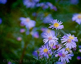 FLORAL PRINT - Purple Aster wall art, Spring and Summer wall decor
