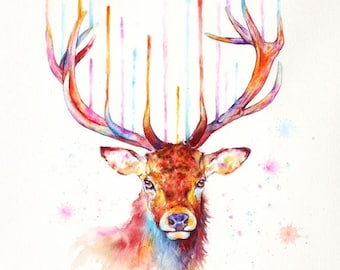 red deer: framed prints (size 12x17cms or 17x22cms)