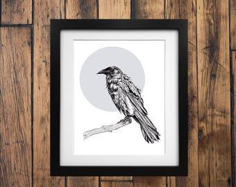 Raven Drawing - Giclée Art Print of an Original Drawing - Raven or Crow Illustration - Bird Art - Ink Drawing
