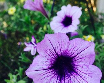 Purple Garden Flowers Printable Art