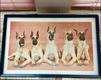 Vintage Great Dane Print