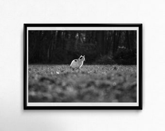 Fine Art Poster Print: Dreaming Away ---- photography - cat - black and white - quiet - calm - peaceful - nature