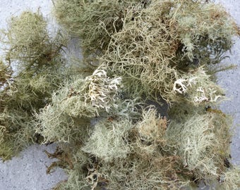 Lichen natural dry perfect for your decorations, models, train, decoration, home decor