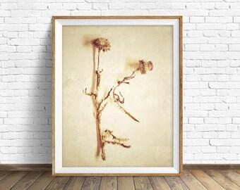"botanical art, thistles, nature photography, instant download printable art, wall art, wall art prints, printable art, art -""Specimen No. 1"""